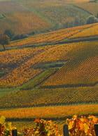 Géométrie aux couleurs variables à l'automne