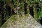 Glycine et pierre