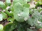 Gouttes après la pluie