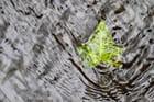Graphisme de saison, feuille d'eau