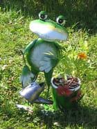 Grenouille jardinière
