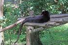 Gros chat noir