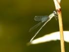 Gros plan de libellule