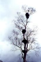 H.L.M. à cigognes