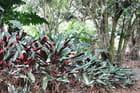 Haie de plantes grasses