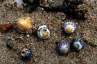 Hasard de marée