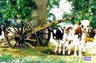 Hénansal aout 1986