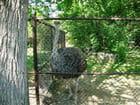 Henry Vilas Zoo,autruche