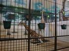 Henry Vilas Zoo.girafes