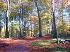 Houssières en automne