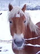 Hugo sous la neige
