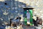 Il est temps de rentrer les chèvres