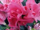Il simbolo di un fiore