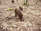 Il y a des truffes