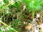 Impénétrable mangrove