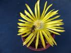 Insecte et fleur de lithops