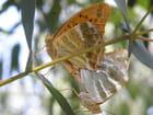 Insectes en macro