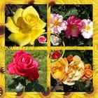 Intermède fleuri