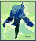 """""""Iris Bleue"""""""