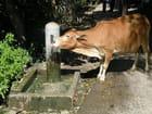 J'ai soif !