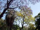 Jardim do principe real