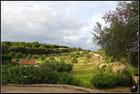 Jardin d'oliviers...