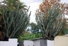 jardin de La Réunion