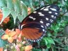 Jardin des papillons à Hunawihr 51