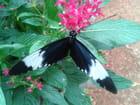 Jardin des papillons à Hunawihr 52