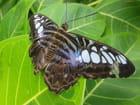 Jardin des papillons à Hunawihr 55