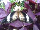 Jardin des papillons à Hunawihr 57
