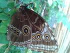 Jardin des papillons à Hunawihr 60