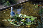 Jardin des Plantes de Rouen (76) Sculptures