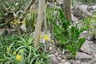 Jardin des plantes succulentes