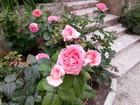 Jardin Espagnol et Florentin (20)