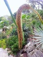 Jardin Exotique (10)