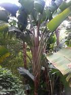 Jardin Exotique (12)