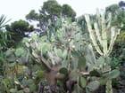 Jardin Exotique (14)