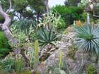 Jardin Exotique (20)