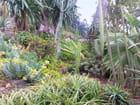 Jardin Exotique (4)