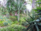 Jardin Exotique (6)