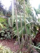 Jardin Exotique (7)