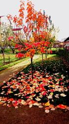 jardin hopital saint joseph