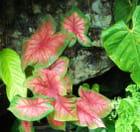 Jardins créoles 2