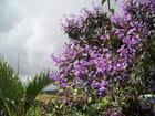 Jardins créoles 3