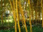 Jaune bambou