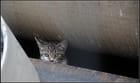 jeune chat