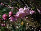 Jeunes fleurs