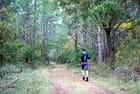 jogging dans les bois