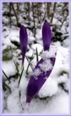 Joli contraste avec la neige